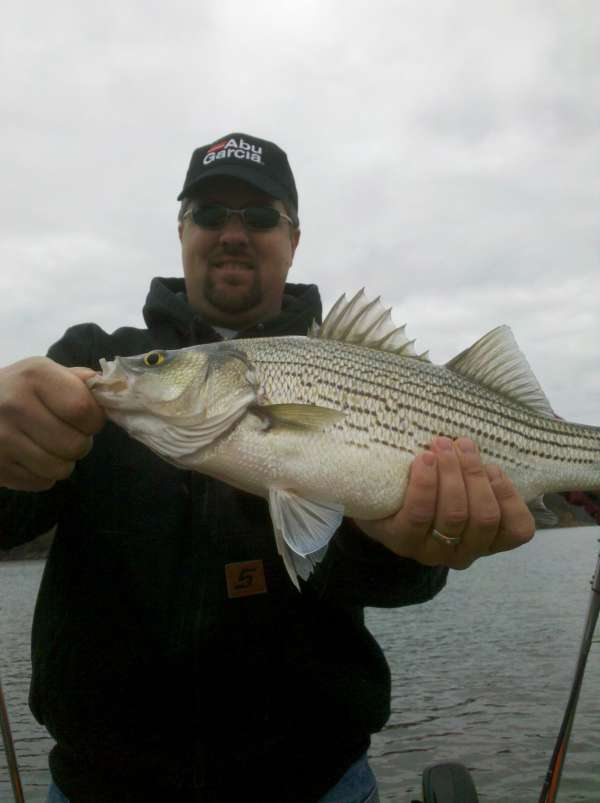 Hybrid striped Bass fish