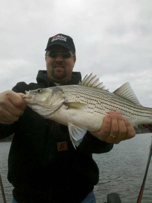 Hybrid striped Bass fish
