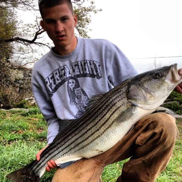 38 inch Rockfish fish