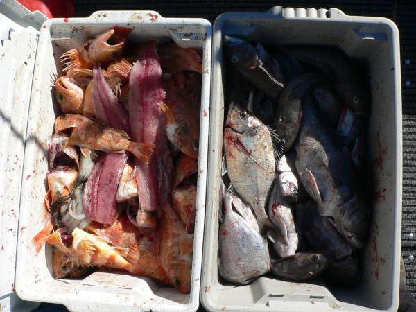 79 Fish fish