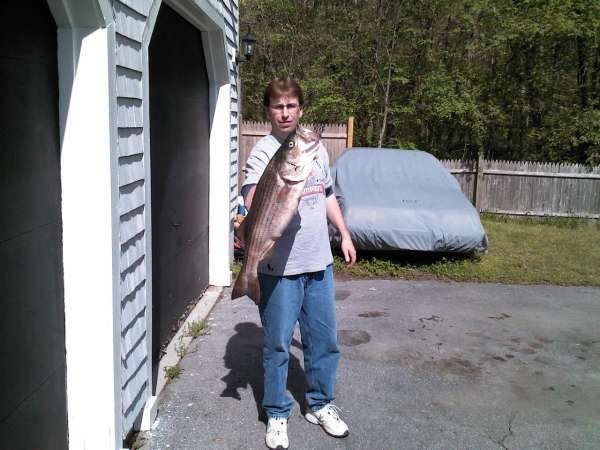 cousins 15# striper fish