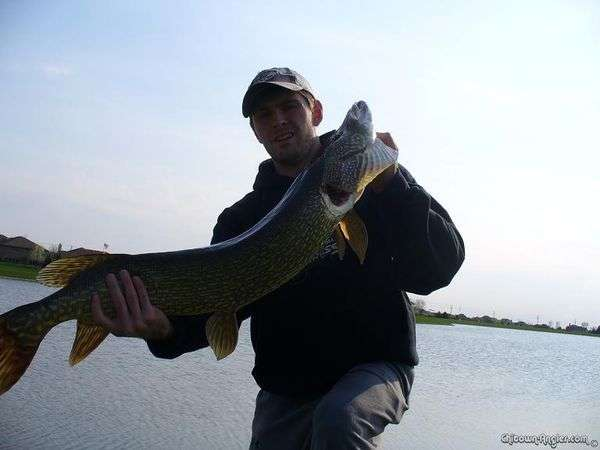 41 Pike fish