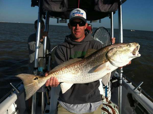 36 inch red drum. mobile bay 15 march 2013 fish