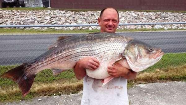 New Missouri State Record fish