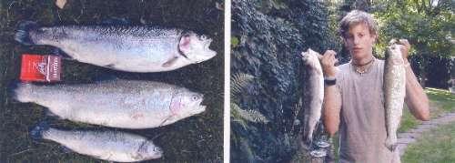 fun-trouts fish