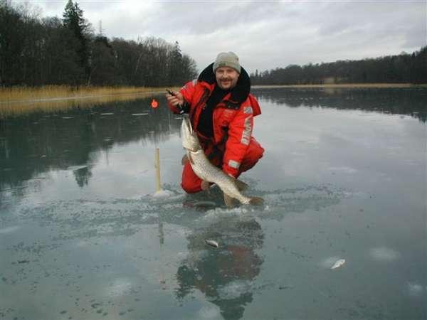 Ice Pike fish