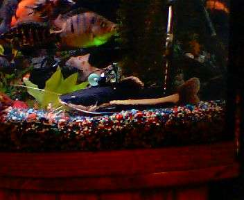 Just Chillin at the bottom fish