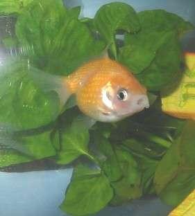 Ma precious fishy fish