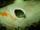KissTheFish fish