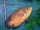 The_Fish_Expert fish