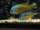 YAVAR fish