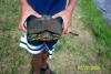 dumb turtles fish