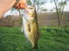 B Town Lunker fish