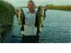 Florida Hawg fish