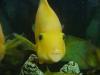 Joe-Joe's parrot fish