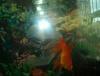 Mah goldfishy got BACK!