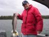 Phil's 5.41 Rainbow fish