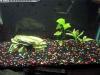 29g Tank fish