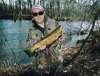 Salmon River Brown Trout fish