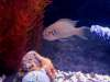 brichardi fish