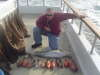 from the coronado islands fish