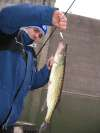 Dam Pickerel fish