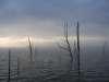 Lake Okachobee.jpg fish