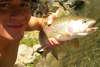 """21"""" Wild Rainbow fish"""