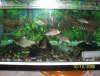 100_0692 fish