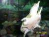 102_0642 fish