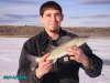 Cooney Walleye fish