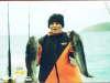 blue cod fish