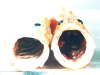 nz,deep sea pearch fish