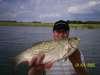 a nice winde fish