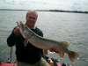 dutch pike fish