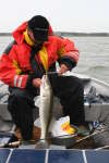 ganja owns fish