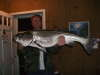 striper fish