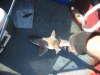 sand shark fish