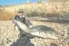 Riba Roja Ebro Spain fish