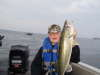 Bay of Quinte Walleye fish