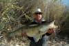 7Kg Zander (Waleye) fish
