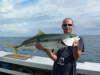 yellow tail kingfish