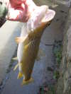 nice brown fish