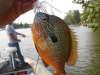 good color fish
