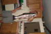 10 LBS  29 INCH STEELHEAD fish