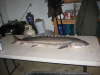 "53"" STURGEON DIDNT WEIGH IT SCALE BROKE fish"
