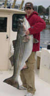 Netted 92# Striper fish