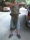 55lb Flat Head Caught By Rod And Reel! fish