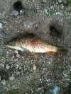 bowfishin