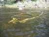 Sunken Boat fish